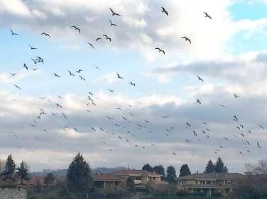 01 Gli Uccelli di Arlate