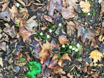 Primavera o solo un'Illusione?